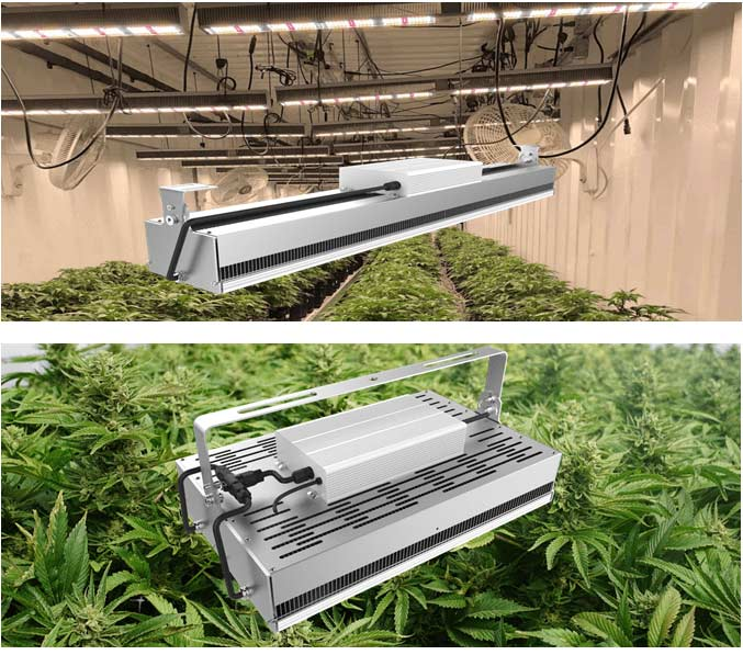 Ag600S/L 600W LED grow lights application examples